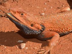 amazing reptiles